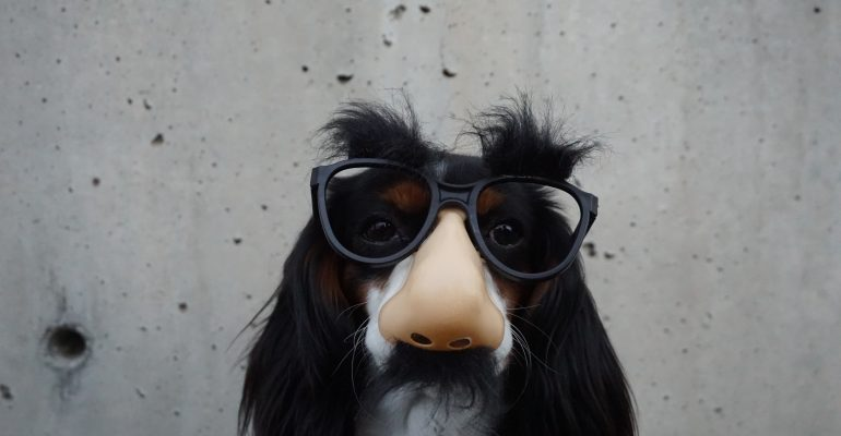 How to Write Killer Commercial Scripts - dog wears novelty nose and glasses